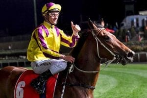 Super Too Blake Shinn