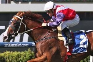 Queensland racehorse Someday