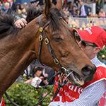 2016 Melbourne Cup Winner