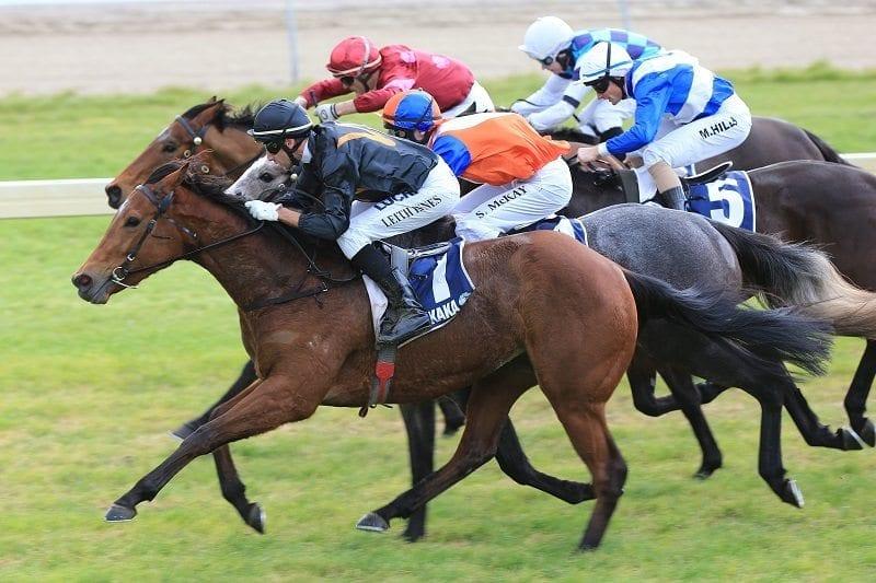 NZ mare Consensus