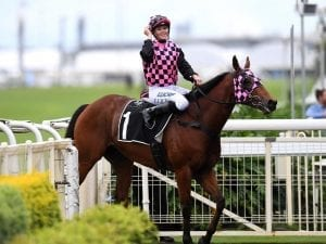 Hopfgarten defies betting drift at Doomben