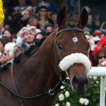 2011 Melbourne Cup Winner