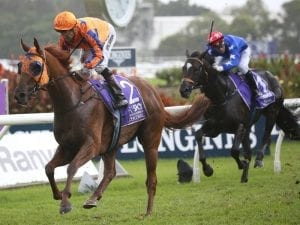 Gingernuts to miss Caulfield Cup