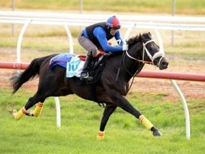 Kaspersky pleases in Werribee gallop
