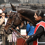 2010 Melbourne Cup Winner