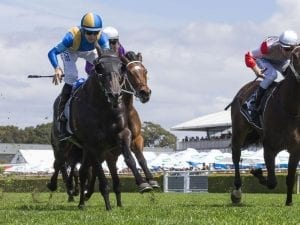 Goodfella's victory a slam dunk for Baker