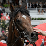2012 Melbourne Cup Winner