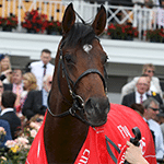 2014 Melbourne Cup Winner