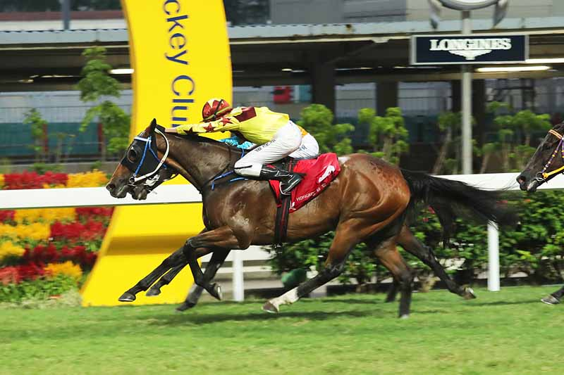 Horse betting online singapore visa horse track betting near me