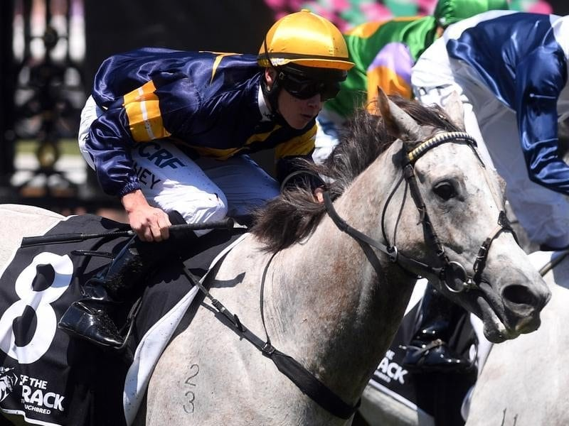 Patrick Moloney returns Tribal Wisdom to the mounting yard