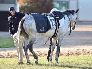 Grey Lion on target for Ballarat Cup