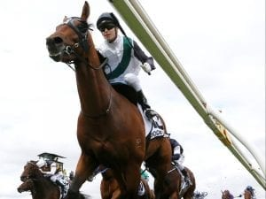 Boom Time settles into Japan ahead of Cup