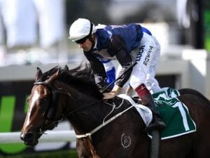 Salsonic zeroes in on Villiers Stakes