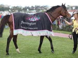 Sandown staying numbers in short supply