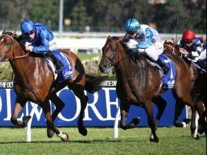 Testashadow to the fore at Rosehill