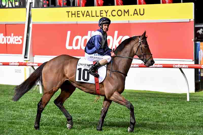 Viddora at Moonee Valley