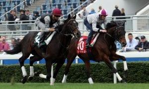 Hong Kong International Raceday contenders Tosen Basil & Staphanos