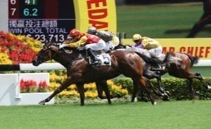 Golden Harvest is one of Derek Leung's best at Happy Valley