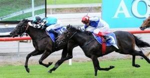 Pony Power winning at the Gold Coast