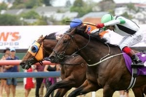 Age Of Fire (inside) winning at Ellerslie