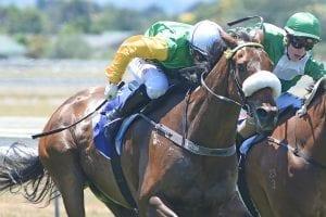 Beefeater winning at Awapuni