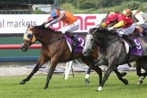 Te Akau Racing's Chance To Dance