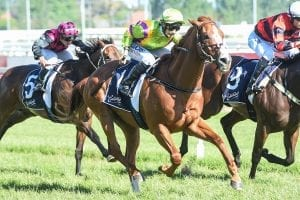 Crystal Dreamer has now won 10 races