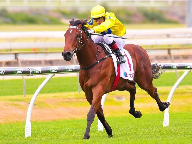 Michael Rodd will ride promising two-year-old Blue Book at Doomben.