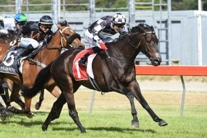 Kawi winning the G1 Captain Cook
