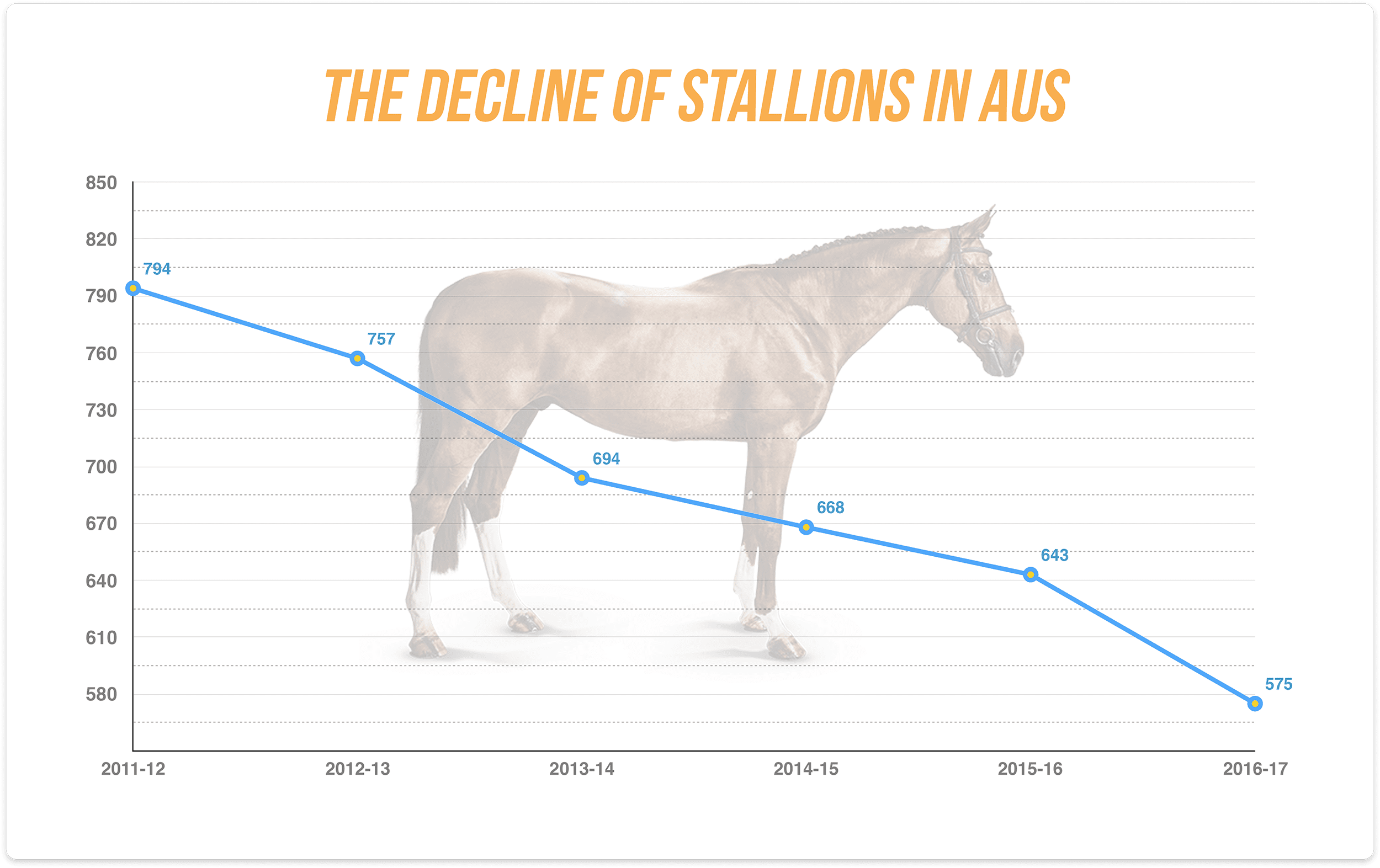 Stallions Graphic