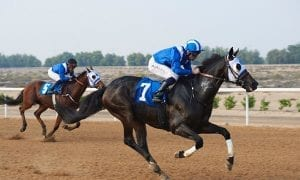 Alraased won the only thoroughbred race