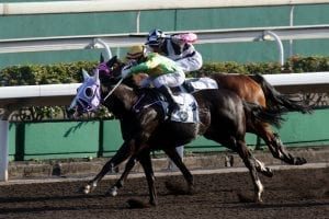 Classic Emperor ridden by Keith Yeung