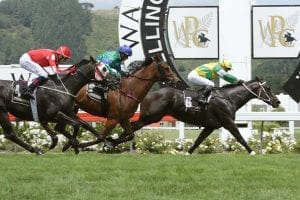 Akoya has won both her Trentham starts