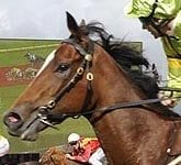 2010 Golden Slipper Winner