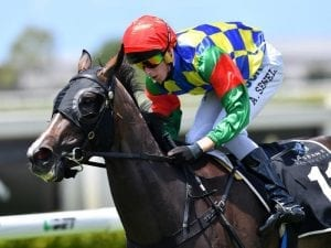 Fish 'N' Snitz to stake her Brisbane Winter Carnival claims
