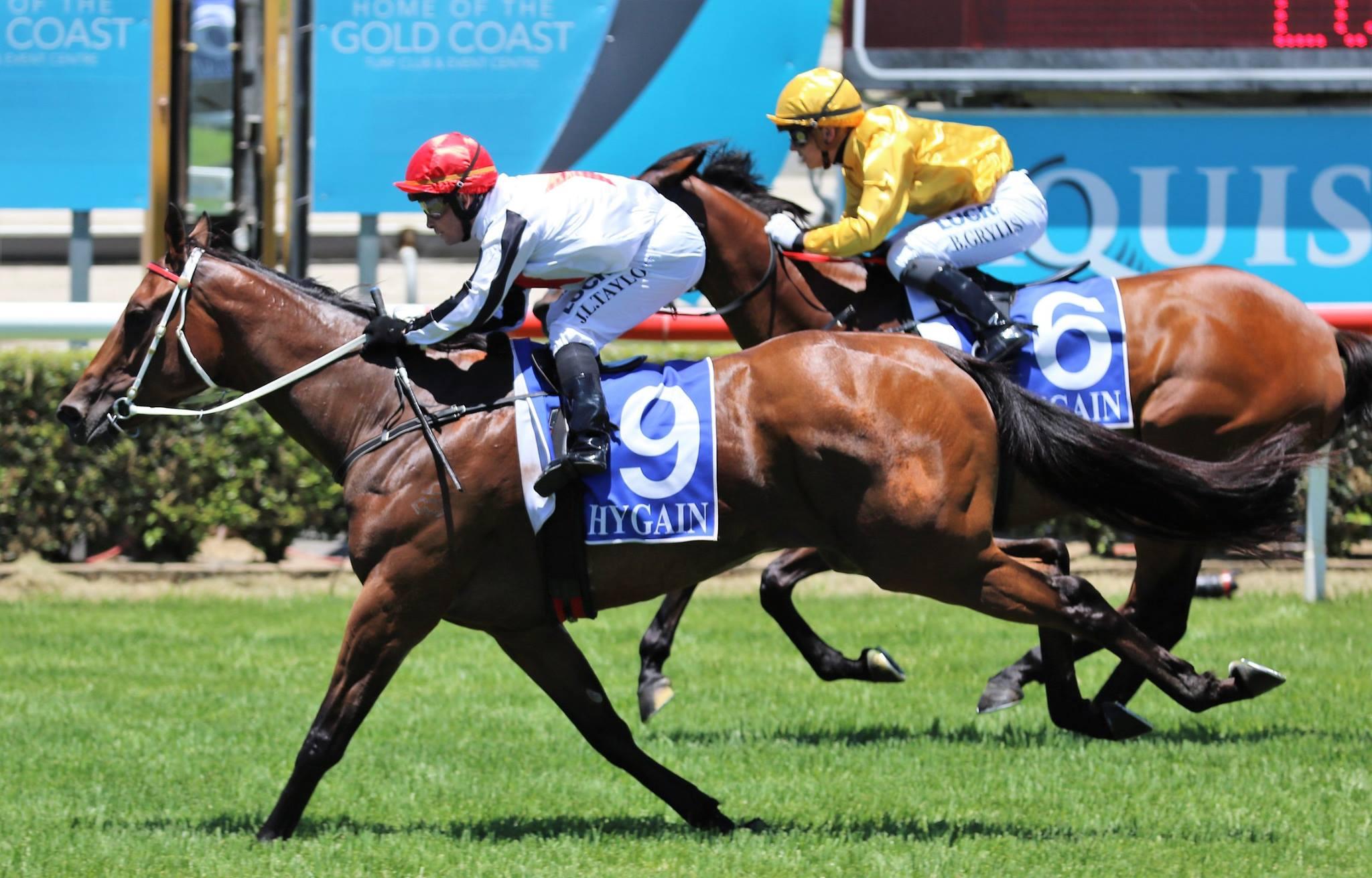 Gold Coast upset winner Licitra