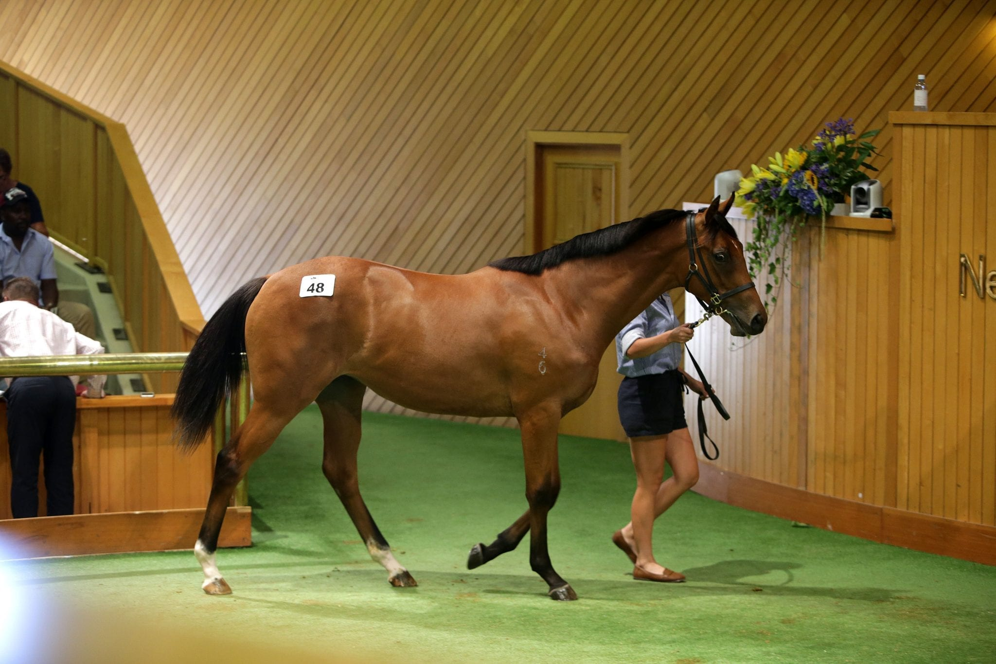 Werther's full sister sells for $500k