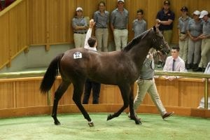 Lot 84 More Than Ready colt