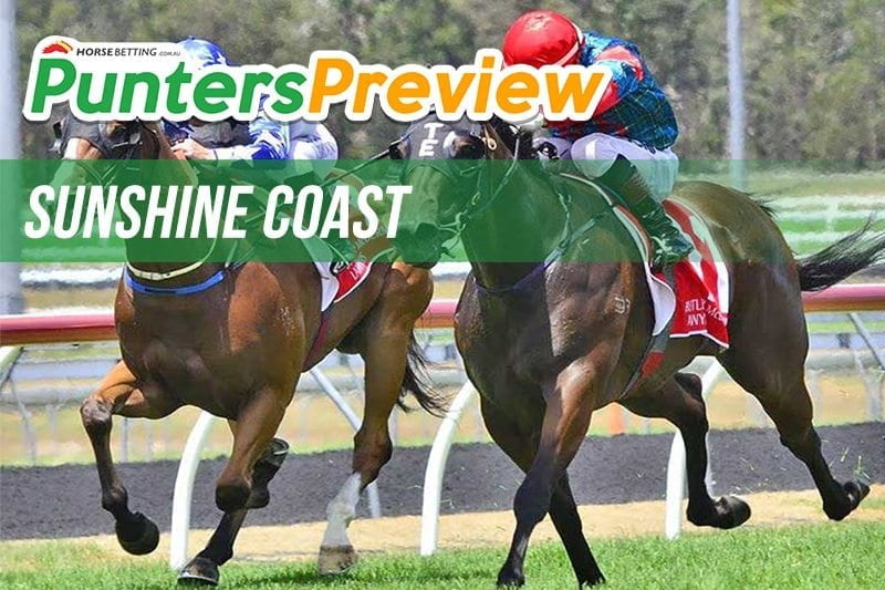 Punters Preview Sunshine Coast