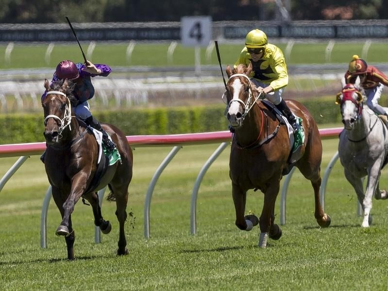 Aquittal and Kopi Luwak fight out the finish at Randwick.