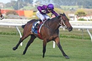 Sir Nate winning at Wanganui