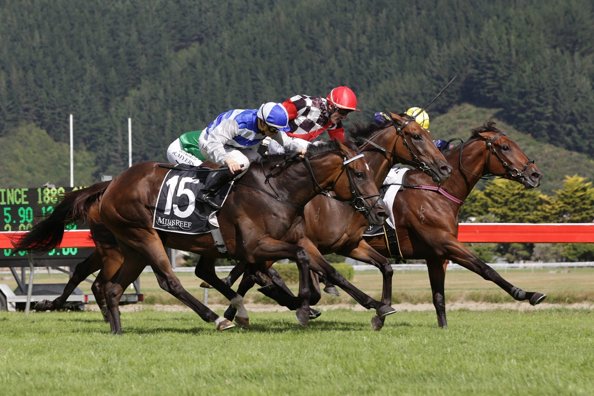 Wait A Sec (red cap) noses out Asama Blue (outer) to win the Group 3 Tui