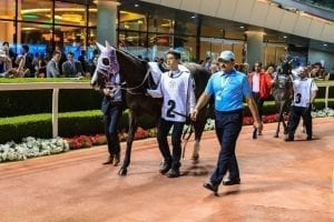 Veteran Stars Lead The Charge In Jebel Ali Friday Feature