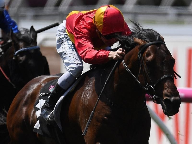 Levendi ridden by Mark Zahra.