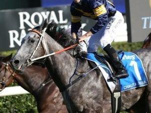 Chautauqua builds towards TJ Smith Stakes