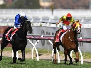 Mighty Boss to take on older horses again in Futurity Stakes