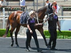 Winx pleases in simulated private Randwick race