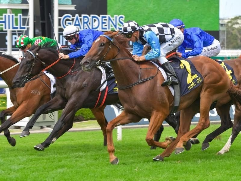 I Am Excited wins the Spark Of Life Handicap at Rosehill