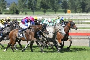 Show The World headed towards third Group 1 Auckland Cup