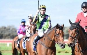 NZ horse Francaletta